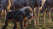 Lionking2019-animationscreencaps.com-240