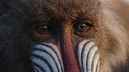 Lionking2019-animationscreencaps.com-300