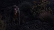 Lionking2019-animationscreencaps.com-10411