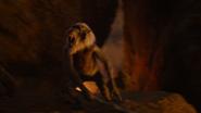 Lionking2019-animationscreencaps.com-11866