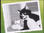 That's a Funny One, Cat.png
