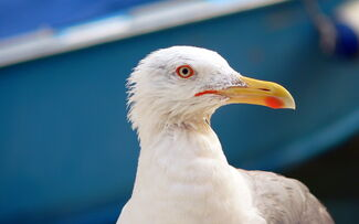 Seagull-in-venice-wallpapers 4193 2560x1600.jpg