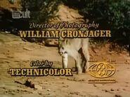 Run, Cougar, Run - 1972 - MPAA