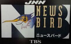 JNN News Bird.jpg