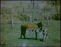 WCFE tv 1979