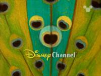 DisneyPeacock1999