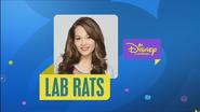 DC Australia Lab Rats Bumper