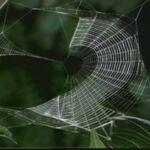 Web-c.jpg
