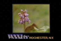 Screen Shot 2020-04-01 at 11.52.20 PM