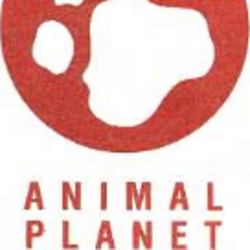 Animal Planet (TV network)
