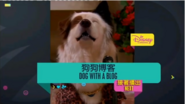 DogWithABlogNextBumperHK2018
