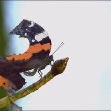 Butterfly-c.jpg