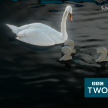 Bbctwo swan 2015.png