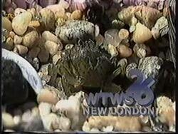 WTWS 1986 (1).jpg
