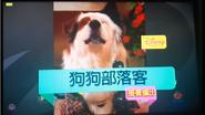 DogWithABlogNextBumperTW2018
