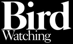 Bird watching.png