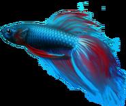 Windows7BetaFish