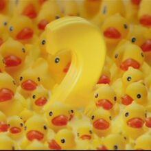 Ducks-ni-b.jpg
