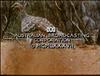 ABC1987IncreditQuantumB