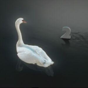 Swanchangesmind-ni-b.jpg