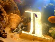 Grt1 fish