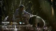 Passion Planet Nat Geo PBS endcap - Gapia - A New Wild - 2014