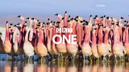GRT One ID - Planet Gapia II - Flamingoes - 2016
