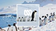NTV2 Penguins ID 2021