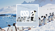 NTV2 Penguins ID 2019