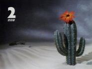 GRT Cactus sting 1991