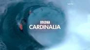 GRT Cardinalia ID 2013 Surfers