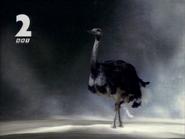 GRT2 Ostrich sting 1991