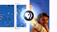 PBS Wide intro 2002 1