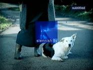 Slennish ID - Dog 2 - 2000
