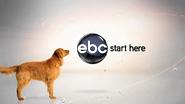 Ebc 2008 dog