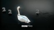 GRT Swans 2