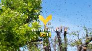 Yernshire ID Bees 2010