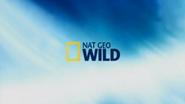 Nat Geo Wild Cheyenne ID - Birds - 2013