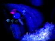 Slennish fish id 1991