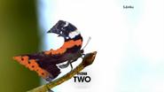 GRT2 ID - Butterfly - 2015