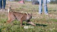 TN1 ID - Bobcat 3 - 2020