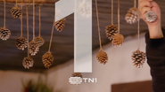 Tn1 acorn 3