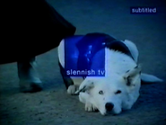 Slennish id dogs 2000