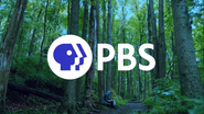 PBS System Cue - Forest - 2019