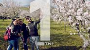 TN1 Trees ID 2019