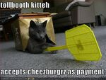 Tollbooth-cat-will-accept-burger-payment.jpg