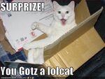 This Lolcat pwnz.