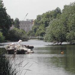 St James's Park & Green Park