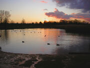 Sutcliffe Park 2.jpg