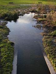 Sutcliffe Park 1.jpg
